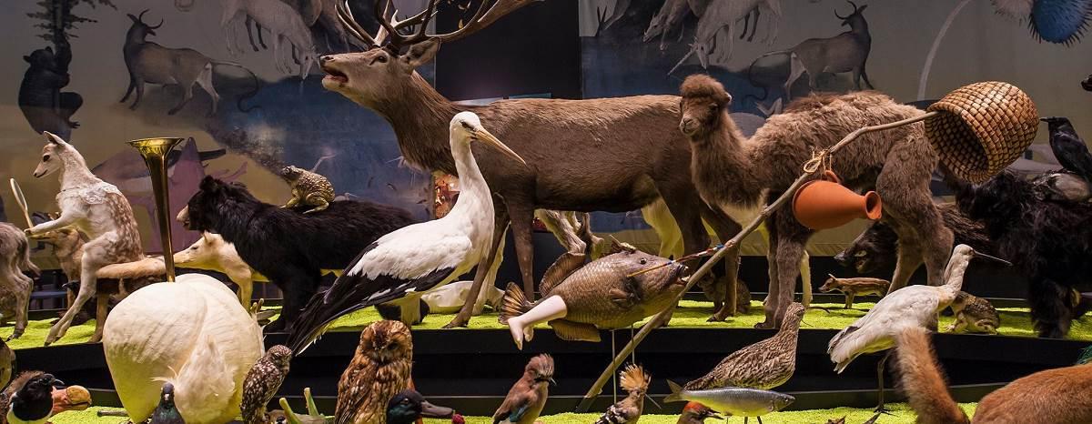 Natuurmuseum Brabant - Tilbrug